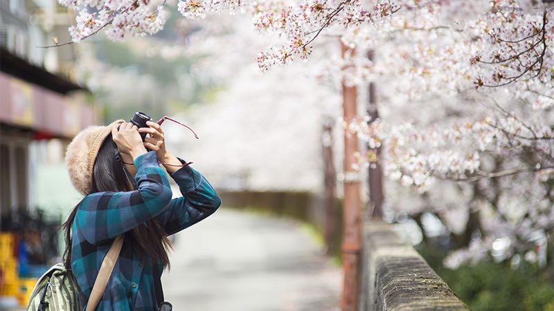 Woman photographing cherry blossom tree.